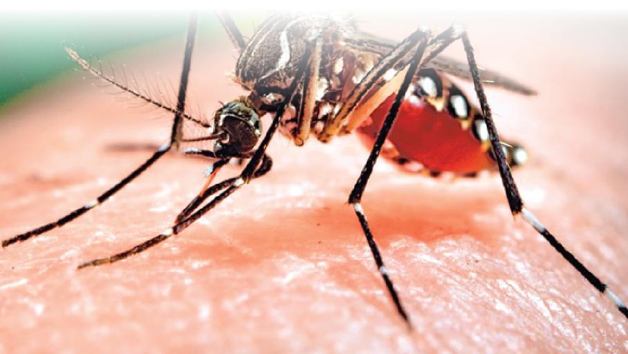 Hơn 67.400 ca mắc sốt xuất huyết trong 9 tháng